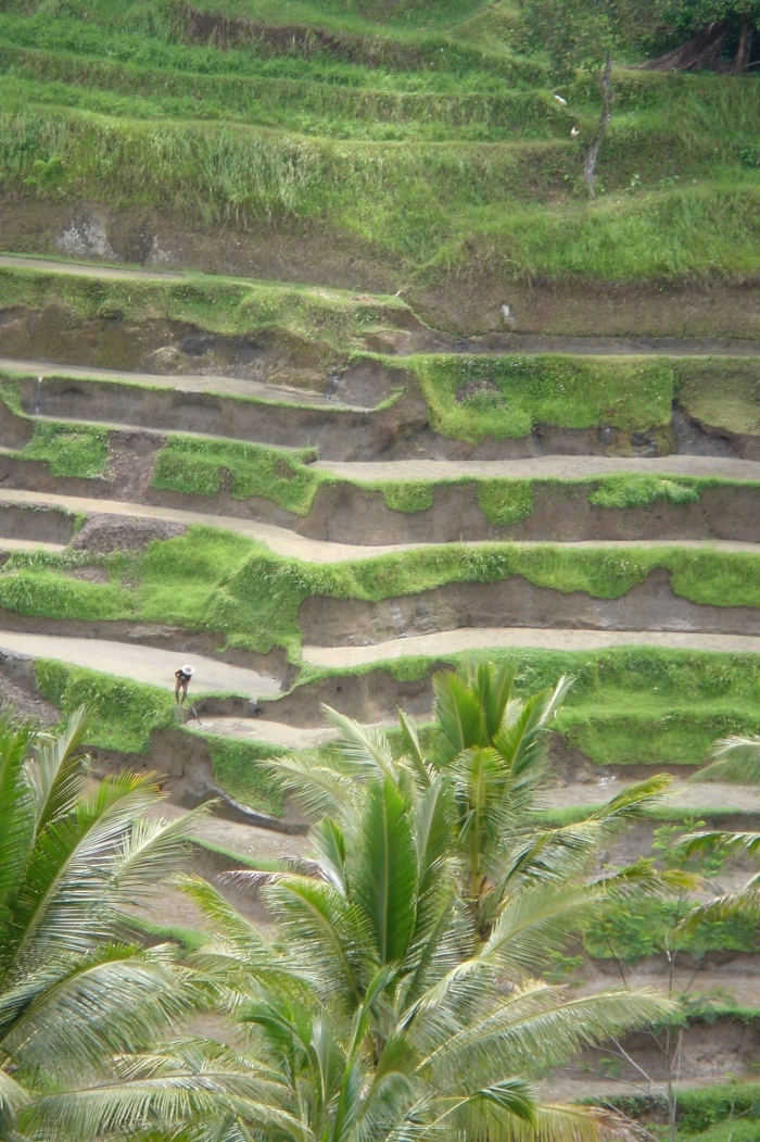 man working on rice field in Bali